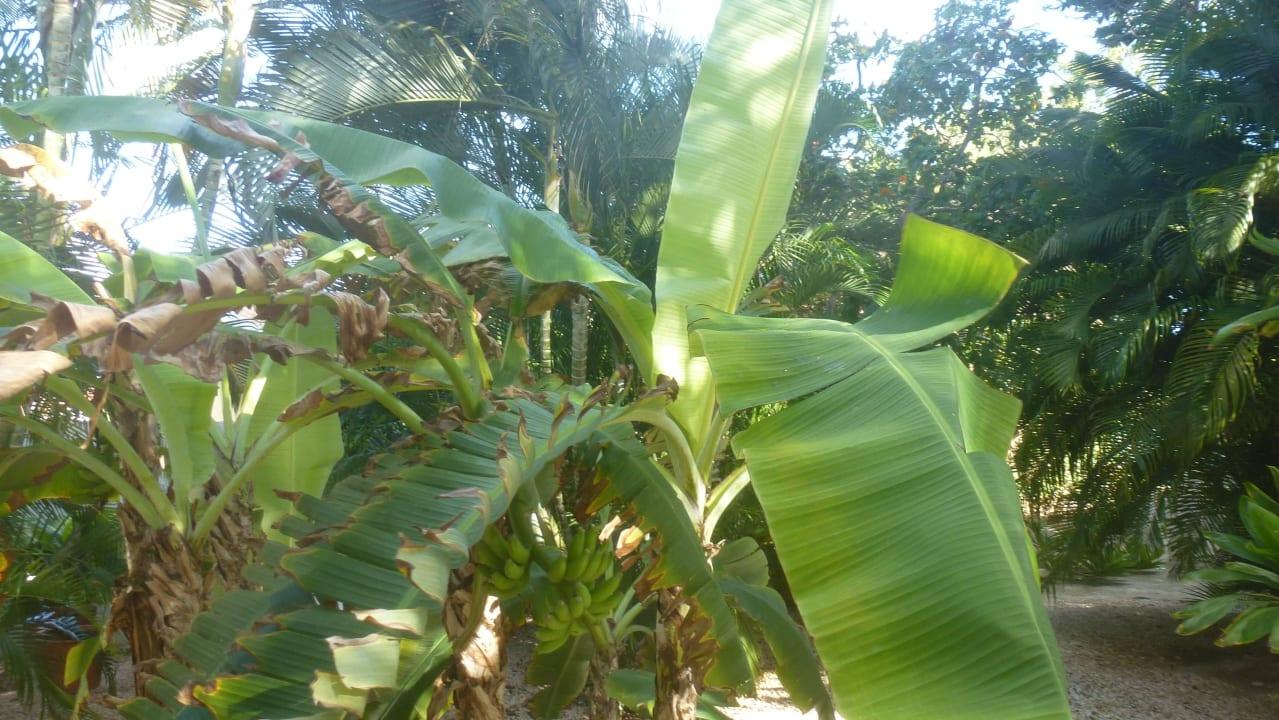 Sehr gepflegter Garten Bed & Breakfast Sombre Di Kabana