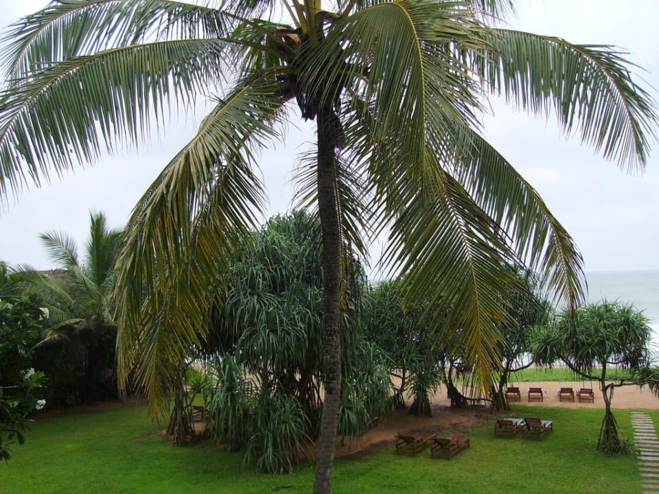 Schöne Aussicht Resort & Spa Temple Tree