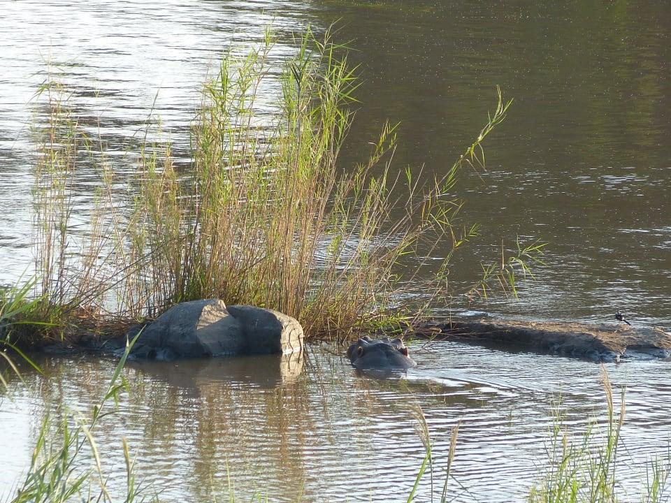 Für die Flusspferde Restcamp Lower Sabie