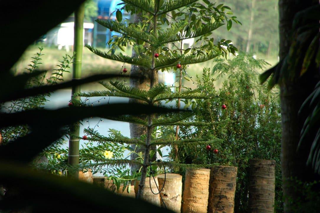 Weihnachtsbaum Lake View Bungalows