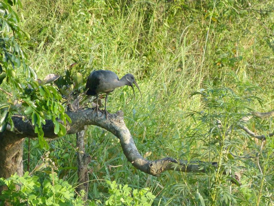 Ibis Restcamp Lower Sabie