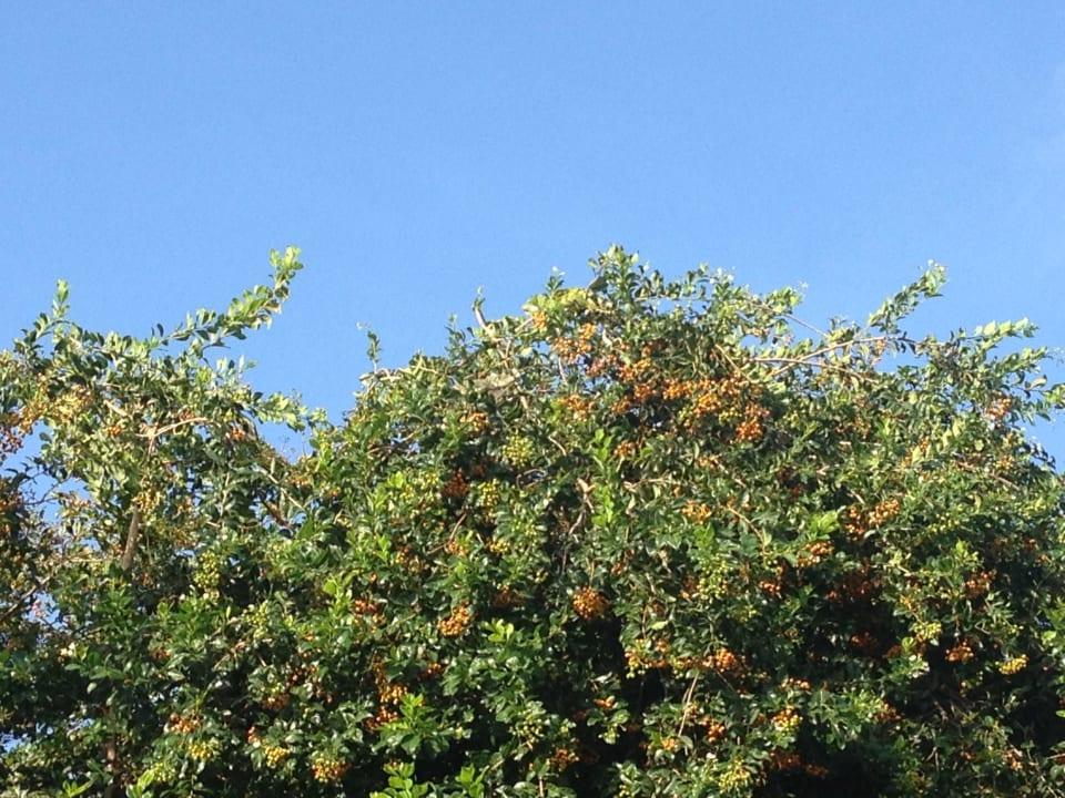 Papageien am frühen morgen direkt am Pool Frangipani Apartments