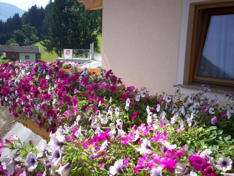 Der Balkon mit wunderschönen Blumen Pension Monitzer