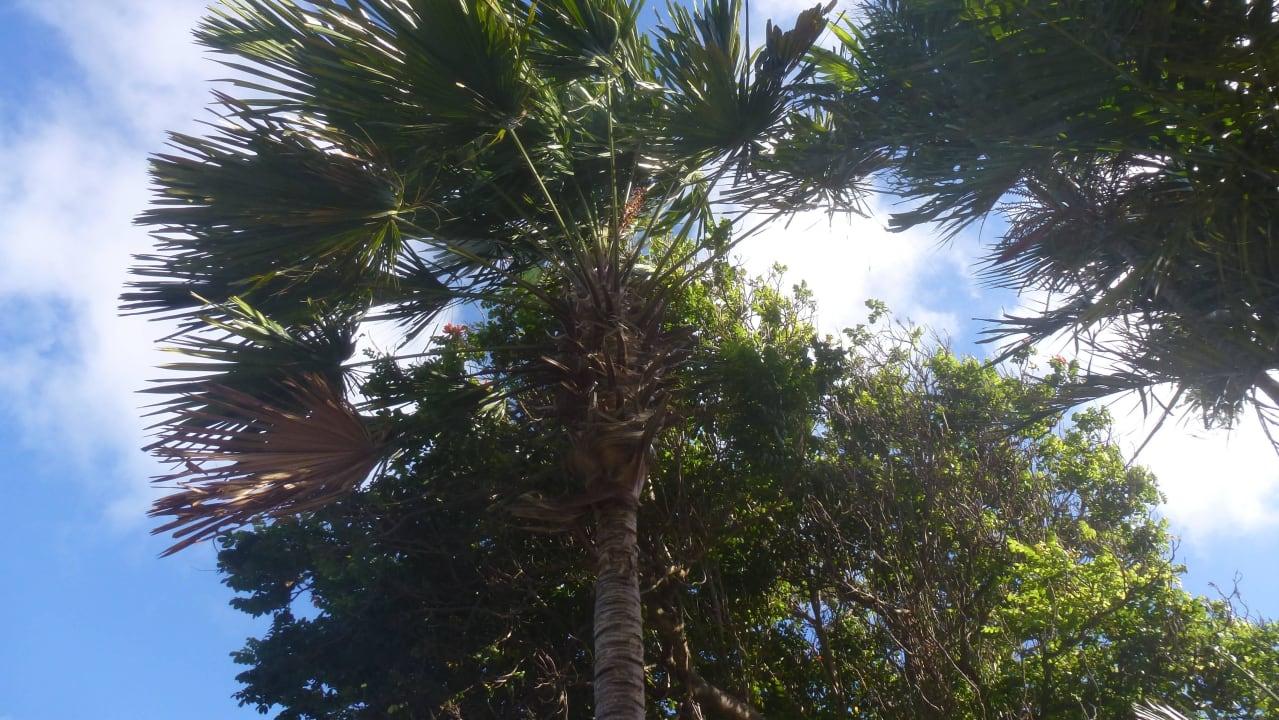 Schöner Garten Bed & Breakfast Sombre Di Kabana