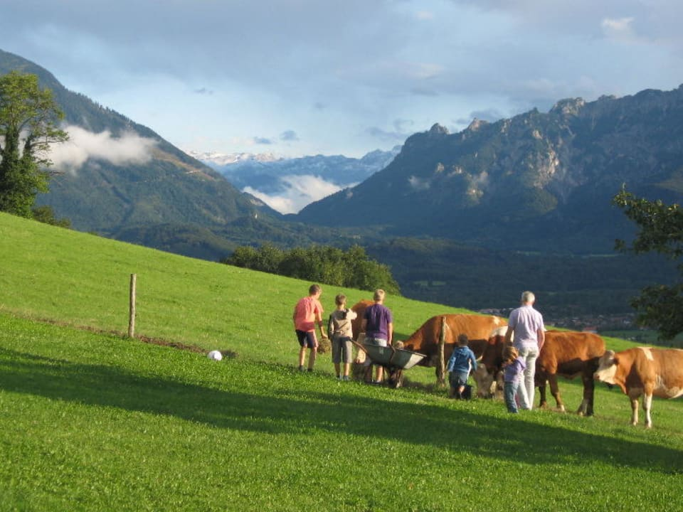 Unsere Kälber auf der Weide neben dem Bauernhof Kochhof