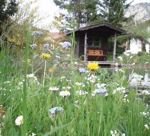 Frühlingswiese im Garten an unserer Teichhütte Naturgesund Haus Viktoria