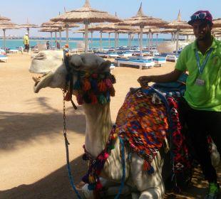 Moses das Kamel Dana Beach Resort