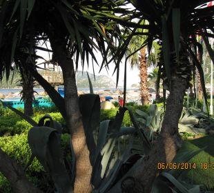 Von der Palme zur Inselgruppe Hotel Aqua