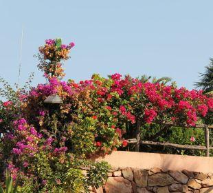 Sehr gepflegte Gartenanlage Hotel Residence Fenicia