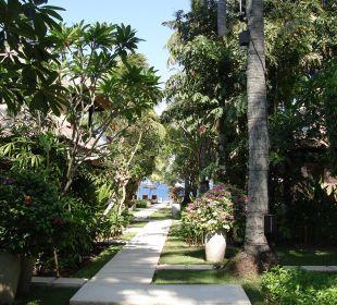 Garten Eden im Qunci