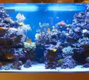 Private Spa Salzwasser Aquarium Small Luxury Hotel Das Tyrol