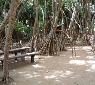 Zakątek na plaży  Hotel Ranweli Holiday Village