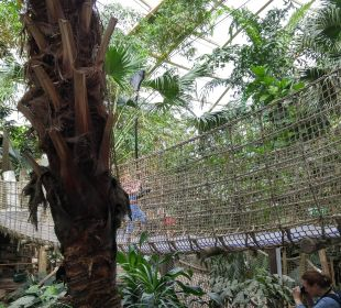 Impression aus dem Djungle Domw Center Parcs Het Heijderbos