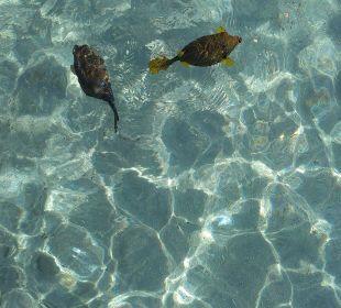Fische vor dem Riff Stella Di Mare Beach Resort & Spa Makadi Bay