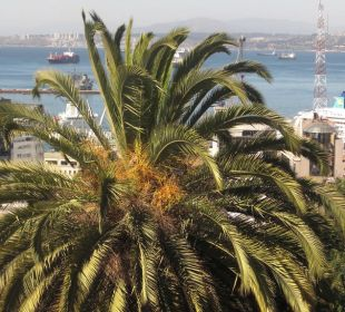 Die schöne Palme