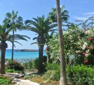 Herrliche Anlage Hotel Nissi Beach Resort