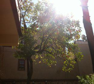 Im Garten Mediterra Art Hotel