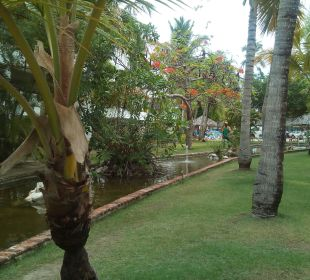 Top angelegter Garten Occidental Grand Punta Cana Resort