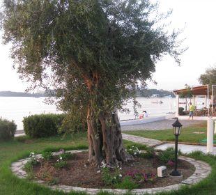 Aug 16 - Olivenbäume Hotel Elea Beach