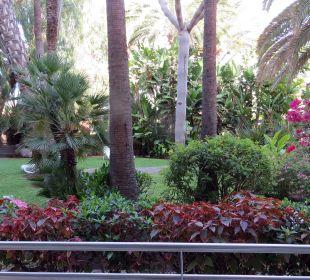 Nachts werden die Bäume angestrahlt IFA Catarina Hotel