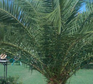 Wunderschön Sunis Elita Beach Resort