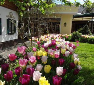 Tulpenfarbenpracht überall Alpenresort Schwarz