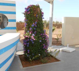 Am neuen Pool SunConnect Djerba Aqua Resort