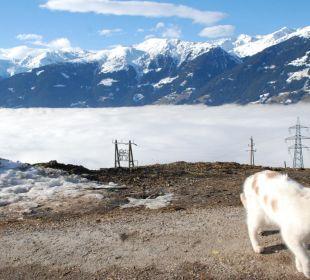 Die Hauskatze und die Aussicht bei Nebel Alpengasthof Enzianhof