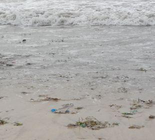 Schmutziges Meer The Ahimsa Beach
