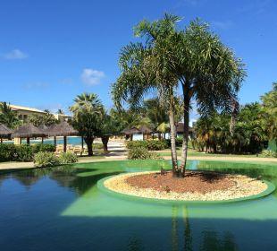 Anlage mit Wasser und Pflanzen IBEROSTAR Hotel Bahia