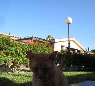 Katze Dunas Maspalomas Resort