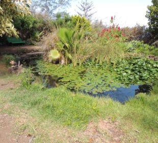 Gartenteich Finca El Rincon