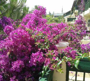 Überall schöne Blumen Oz Hotels Incekum Beach