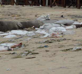 So sieht kein schöner Strand aus The Ahimsa Beach