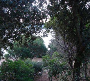 Widok na morze wsród drzew ogrodu Verudela Beach & Villa Resort