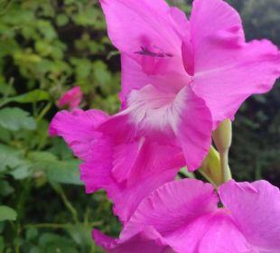 Blumen Side Sun Bella Resort & Spa