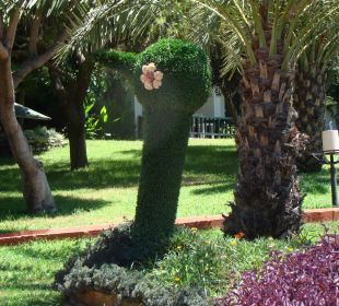Schöner Garten SENTIDO Perissia