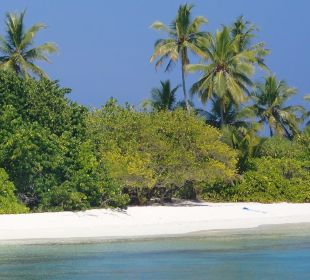 Strand und Vegetation