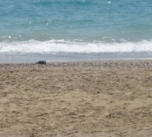 Sand sehr heiß Club Aldiana Side
