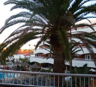 Palme im Patio Apartments and Bungalows Sol Barbacan