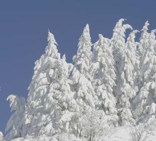 Winterlandschaft Hotel Goldener Berg