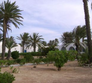 Bungalowy w otoczeniu palm Hotel Sidi Slim