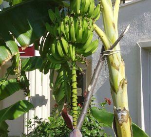 Banane Side Sun Bella Resort & Spa