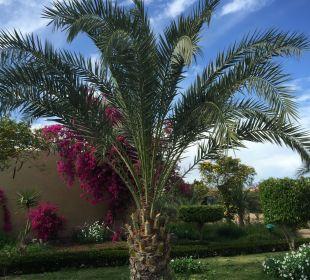 Palme Three Corners Fayrouz Plaza Beach Resort