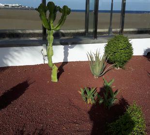 Gartenanlage Hotel Las Costas