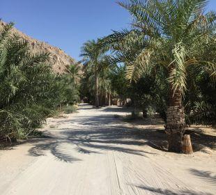 Weg zu den Villen Six Senses Spa At Zighy Bay
