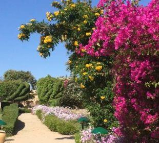 Traumhafte Blumen im Garten  Three Corners Fayrouz Plaza Beach Resort