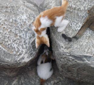 Junge Kätzchen beim Spielen Hotel Side Sun