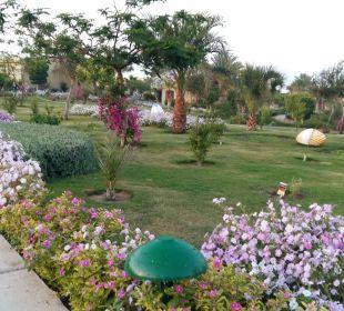 So eine Blütenpracht Three Corners Fayrouz Plaza Beach Resort