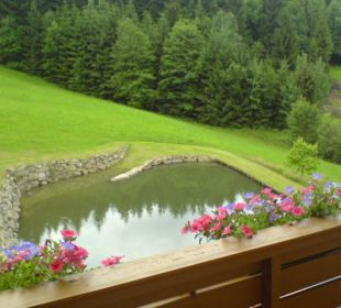 Blick aus dem Zimmer auf den Naturbadeteich